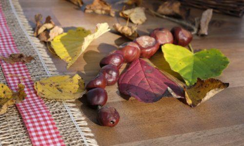 chestnut-2878725_1920