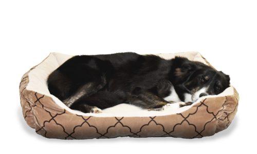 dog-1961112_1920